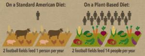 standard vs plant based